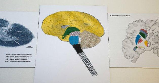 Professora da USP encontra maneira de ensinar anatomia para aluna deficiente visual 2