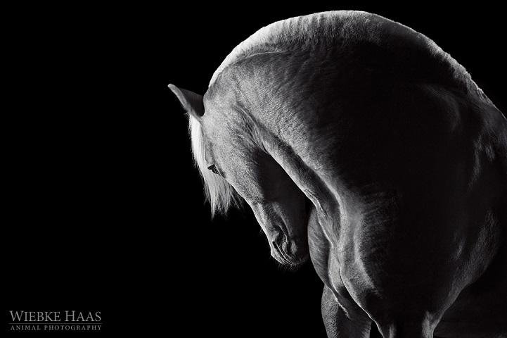 Fotógrafo alemão captura a beleza e força dos cavalos selvagens em poderoso ensaio 17