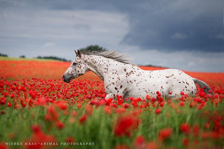 Fotógrafo alemão captura a beleza e força dos cavalos selvagens em poderoso ensaio 15