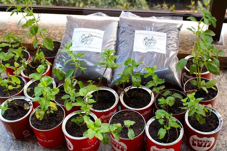lixo-orgânico-adubo-mudinha-hortaliça