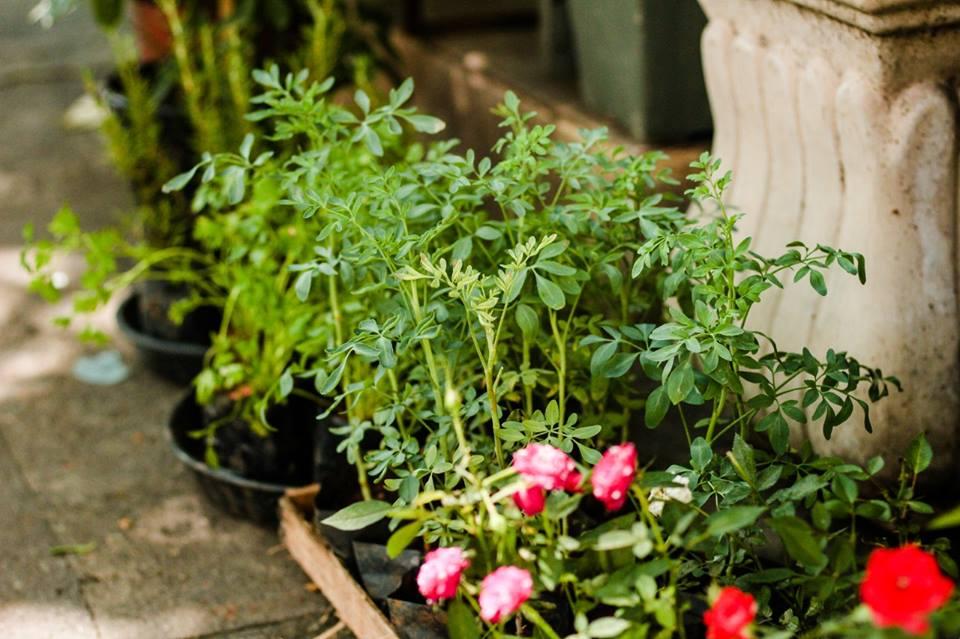 mudinhas-de-plantas-floricultor-rio-de-janeiro