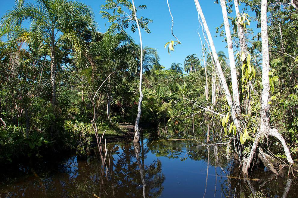 Canoa movida a energia solar está sendo usada como meio de transporte de comunidades da Amazônia 9