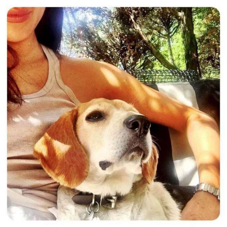 Meghan Markle adota beagle