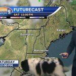cachorra-interrompe-previsão-tempo