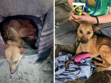 homens resgatam cachorro ferido armadilha