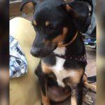 cão-salva-famílias-incêndio-são-paulo