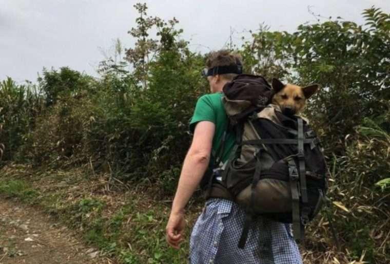 cachorro resgatado mochila