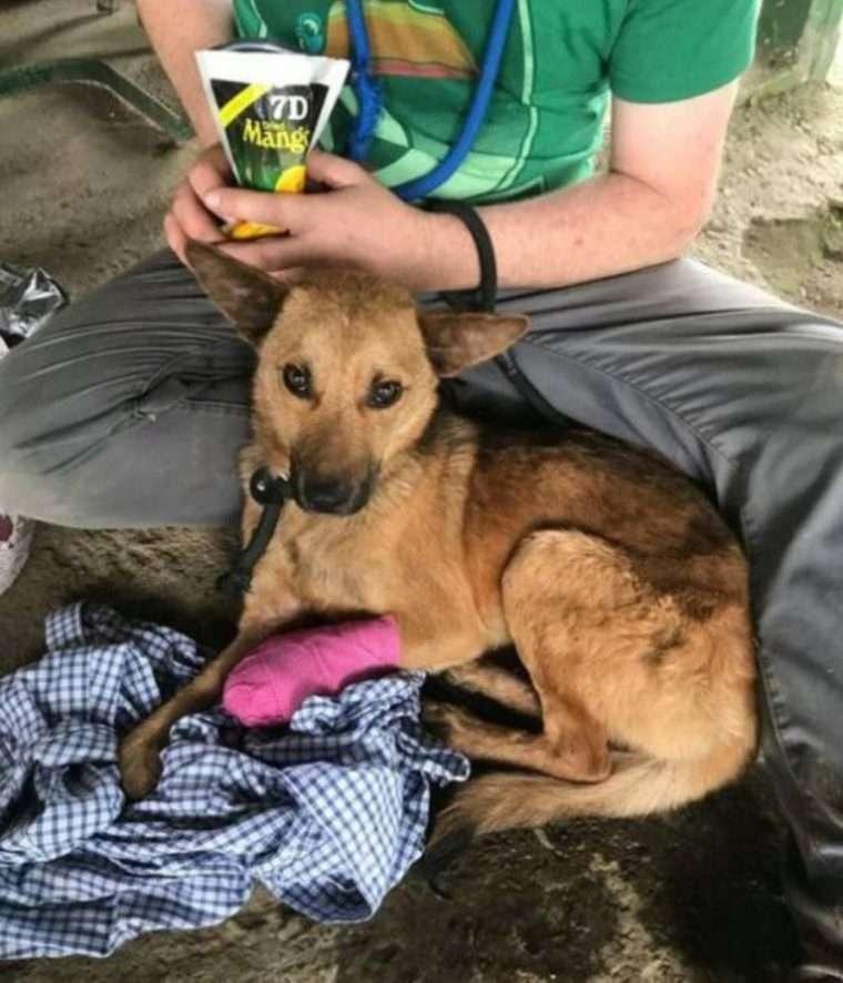 cachorro ferido resgatado