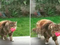 gata flores rosa vizinhos