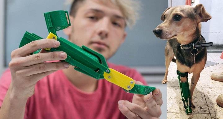 Estudante argentino produz próteses para cachorros amputados de graça 5