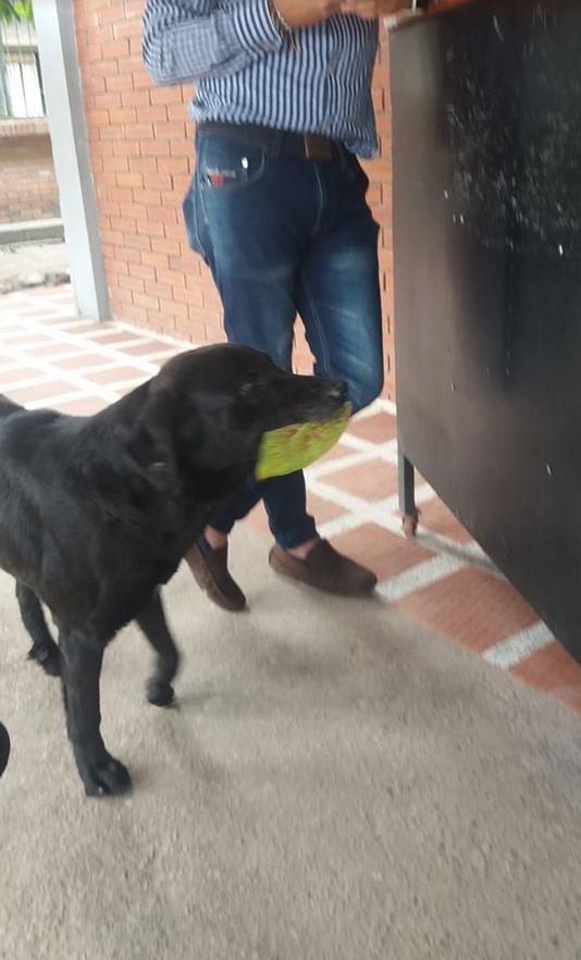 De tanto observar alunos comprarem lanches, cão começa a fazer o mesmo 1