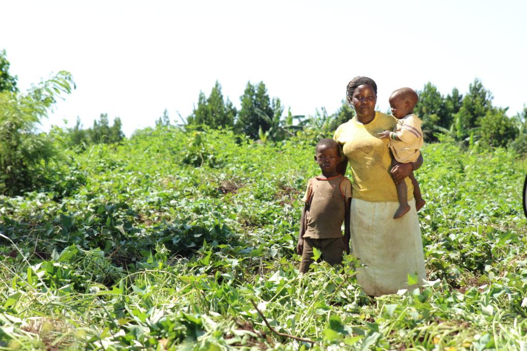 agrofloresta família uganda