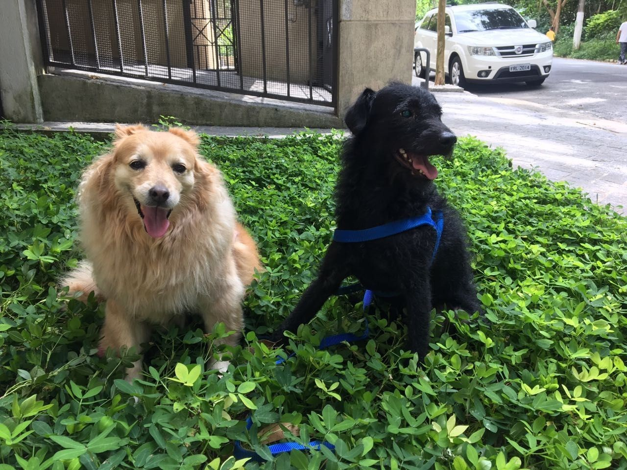 cachorro eutanásia