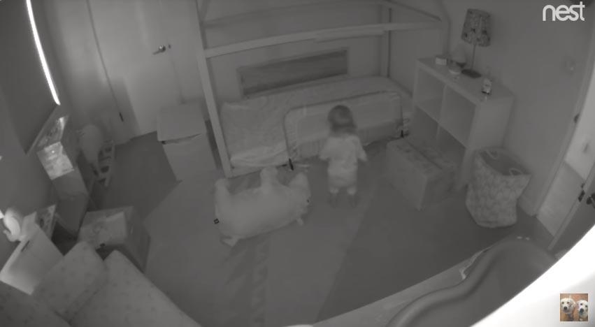 cães ajudam bebê escapar quarto