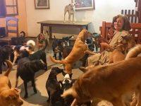 mulher supera depressão amor cães