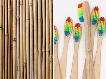 escovas bambu