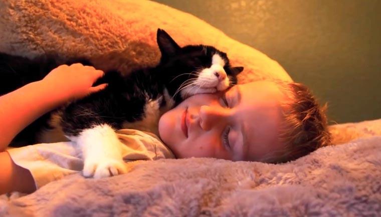 gato menino abraçados