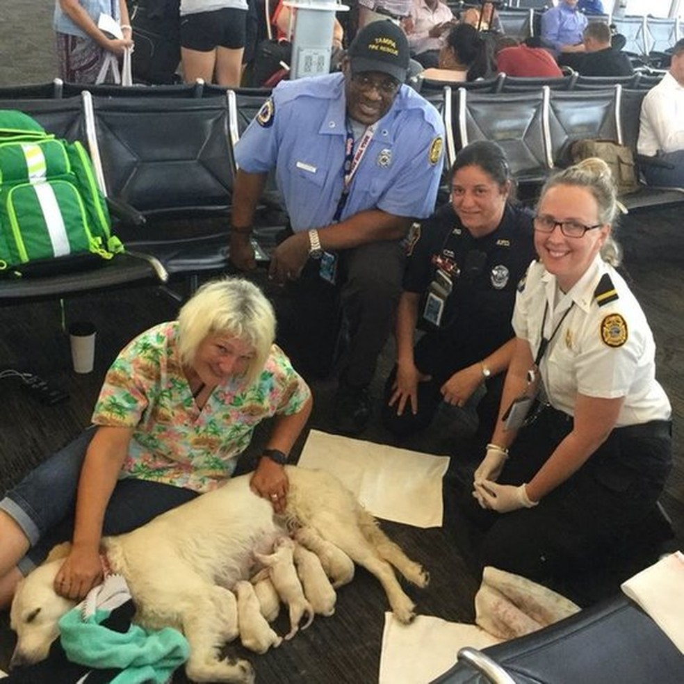 cachorra parto terminal aeroporto