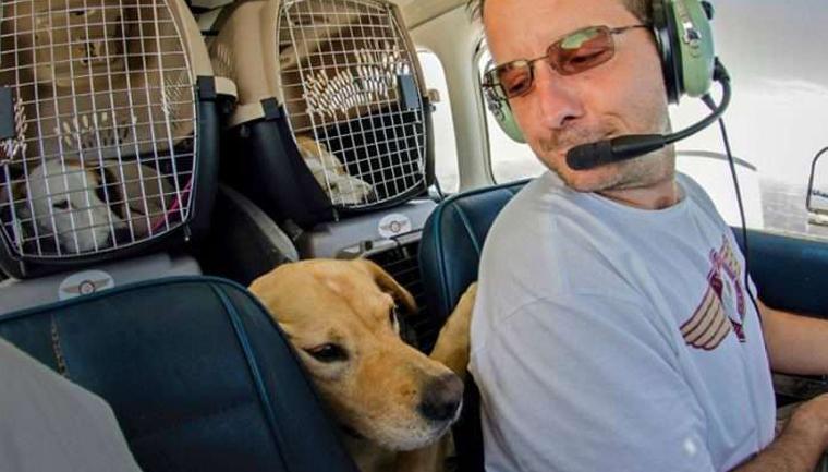 Homem compra avião para salvar cães e gatos da eutanásia 1