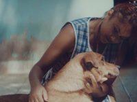 humanos-guias cães cegos