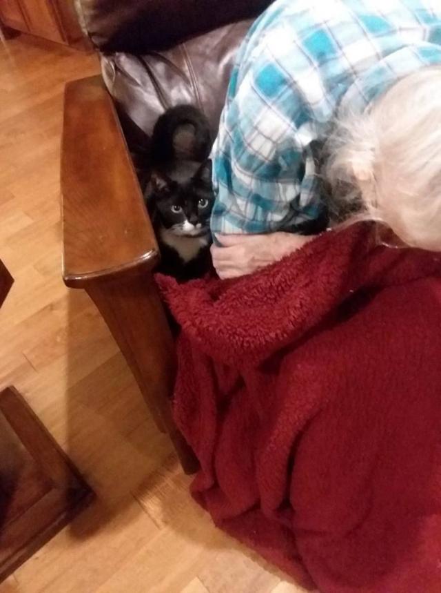 Gata se recusa a sair do lado da sua dona idosa prestes a falecer