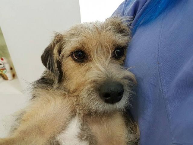 cadelinha paraplégica cuida cachorros internados clínica