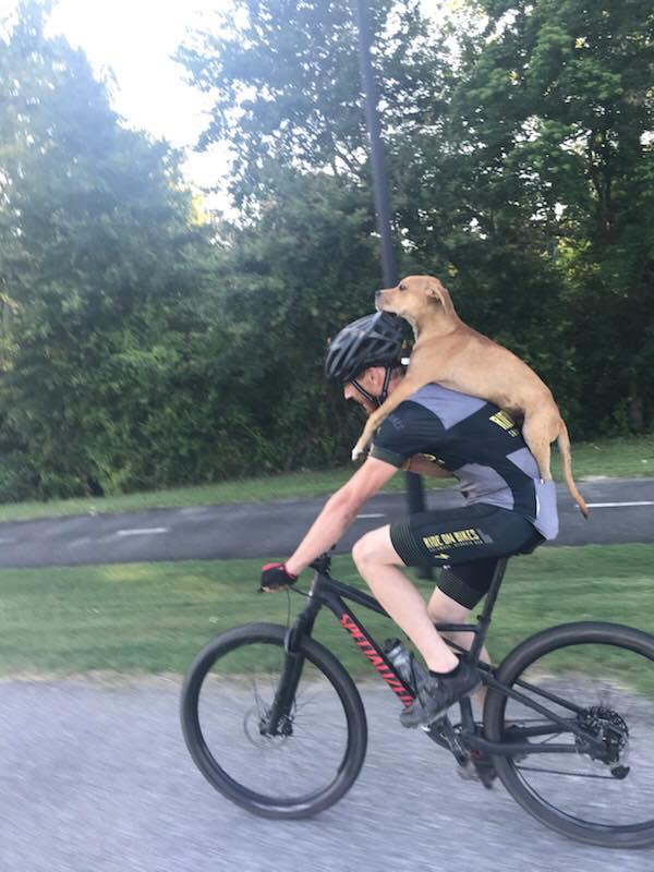 ciclista dá carona para cachorrinho atropelado