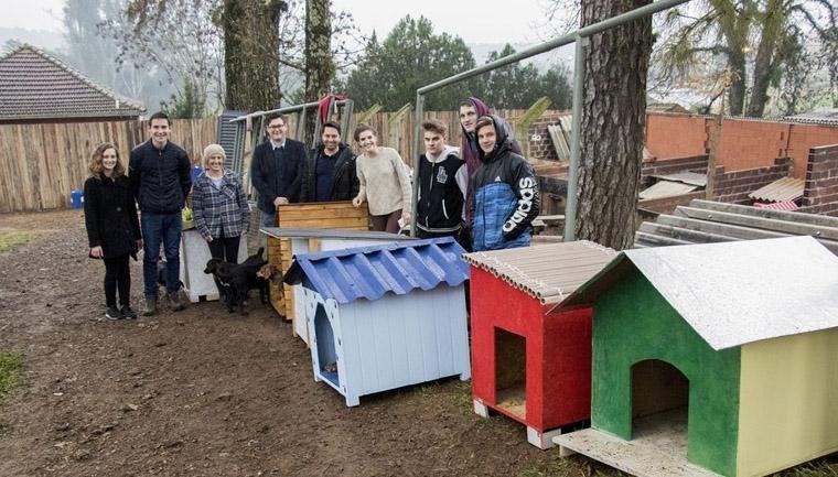 estudantes engenharia civil constroem casinhas cachorros