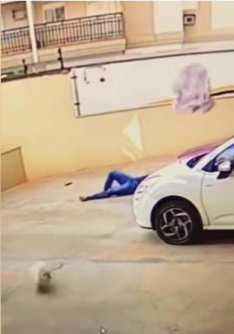 vizinho salva cadelinha caiu 9º andar prédio ribeirão preto