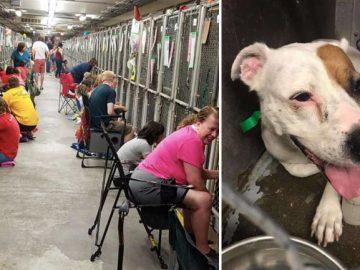 pessoas canil confortam cães durante fogos de artifício