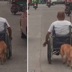 cachorro empurra cadeira rodas tutor