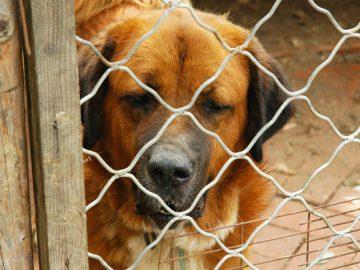 lei florianópolis proíbe cachorros acorrentados