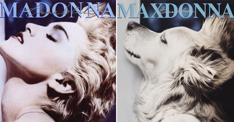 Fotógrafo recria fotos de Madonna usando seu cachorro 😂 19