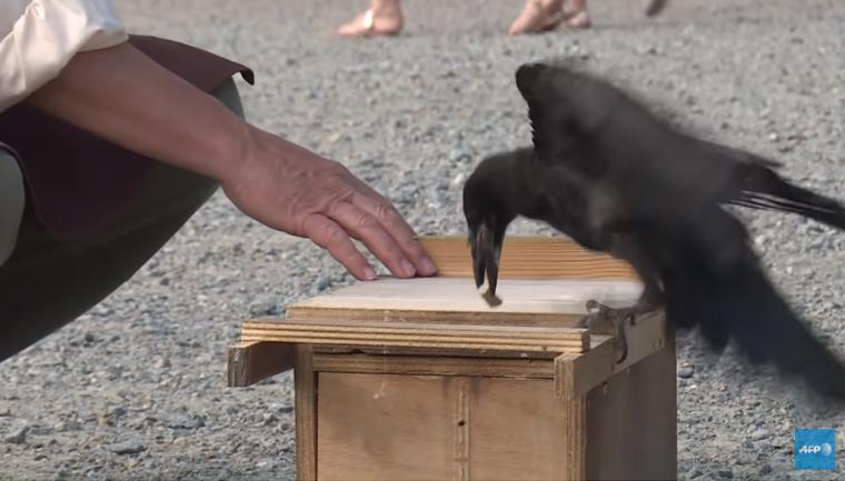 parque frança corvos coletar descartar lixo