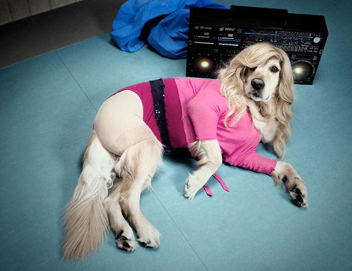 Fotógrafo recria fotos de Madonna usando seu cachorro 😂 8