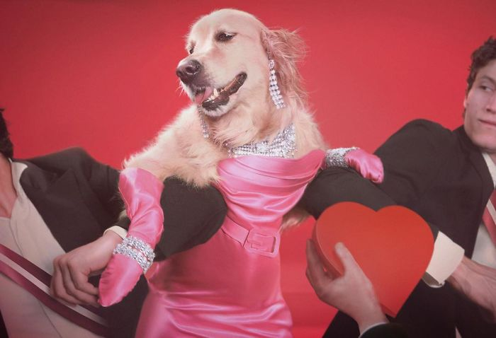 Fotógrafo recria fotos de Madonna usando seu cachorro 😂 14