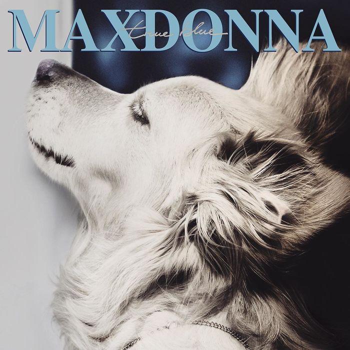 Fotógrafo recria fotos de Madonna usando seu cachorro 😂 3