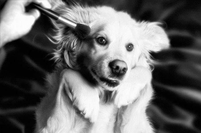 Fotógrafo recria fotos de Madonna usando seu cachorro 😂 16