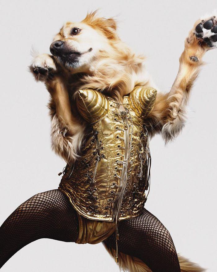 Fotógrafo recria fotos de Madonna usando seu cachorro 😂 10
