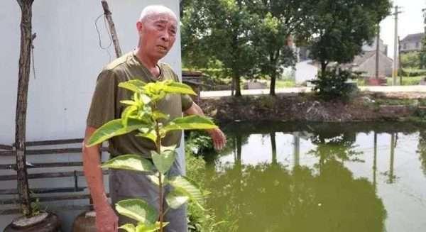 vovô 80 anos salva menino rio