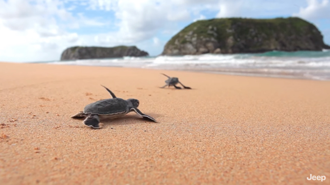 série narra história projeto TAMAR tartarugas