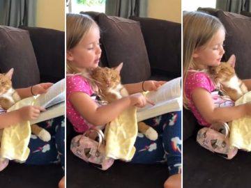 menina lê história gato dormir preguiçosamente