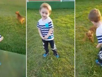 vídeo menino amizade cachorro