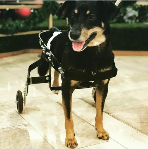 13 histórias lembram importância ongs cuidam cães