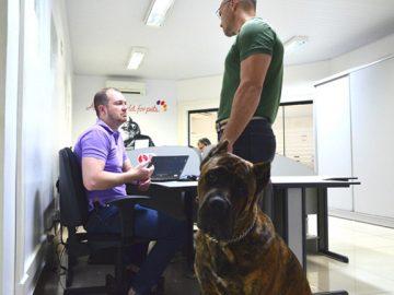 empresa permite funcionários levem pets escritório