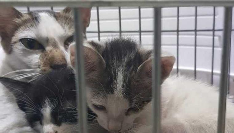 casal salva quatro gatos incêndio museu nacional