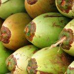 Estudantes solução óleo mar casca coco verde