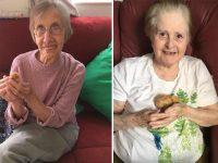 galinhas ajudam combater solidão idosos