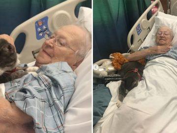 Gato cego cura idosa câncer pulmão