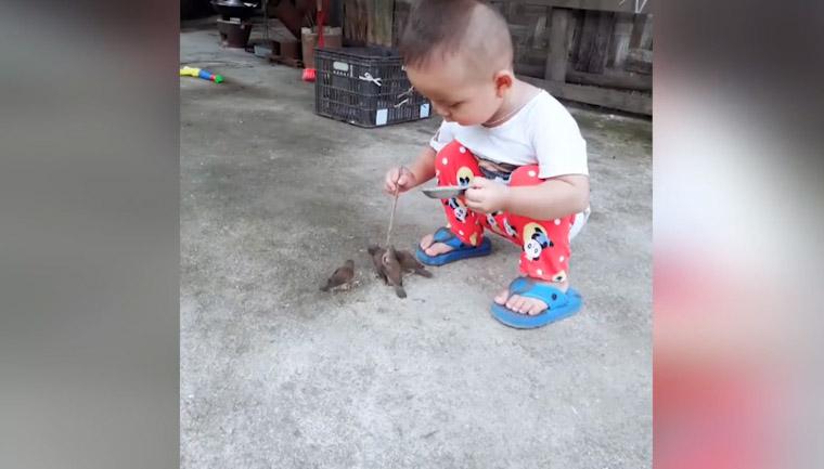 Menino alimenta passarinhos famintos incapacitados voar